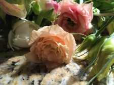 A perfectly peach lisianthus blossom